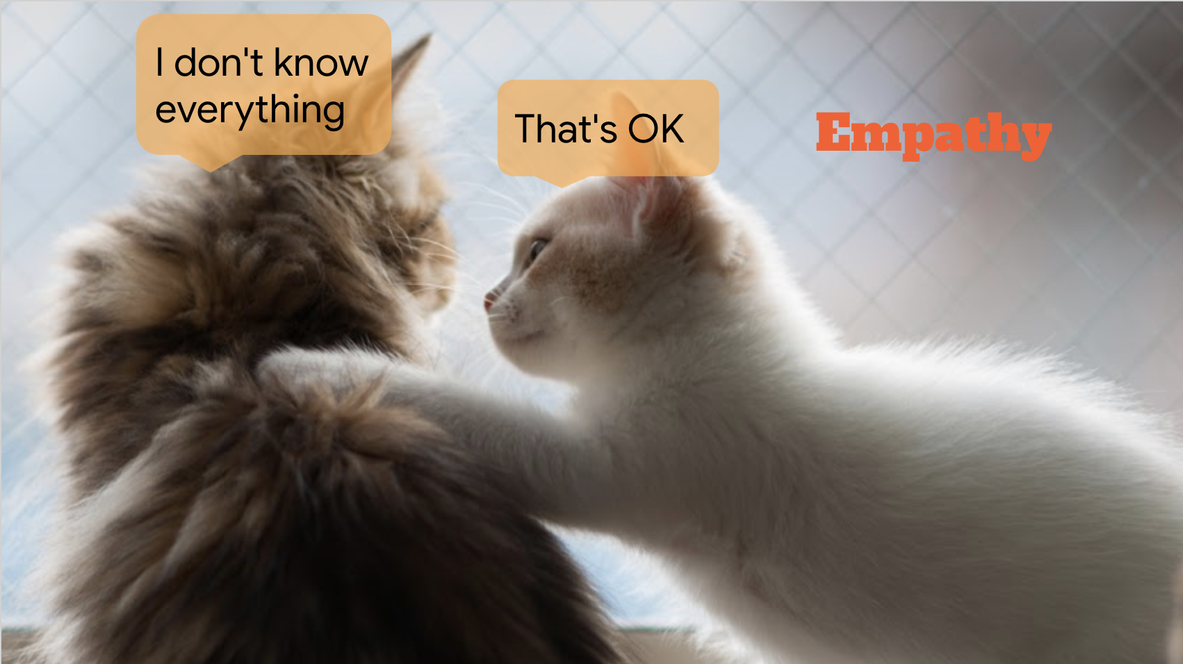 "Photo of two cats. One says ""I don't know everything"". The other says ""That's OK""."